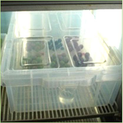 ブドウ果粒の培養試験