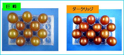 果粒培養の品種間差異