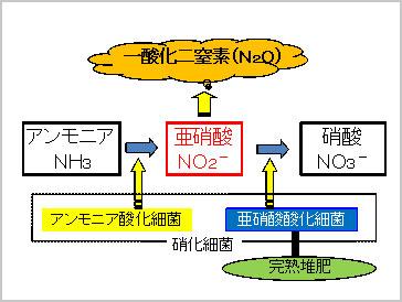 堆肥化における硝化作用